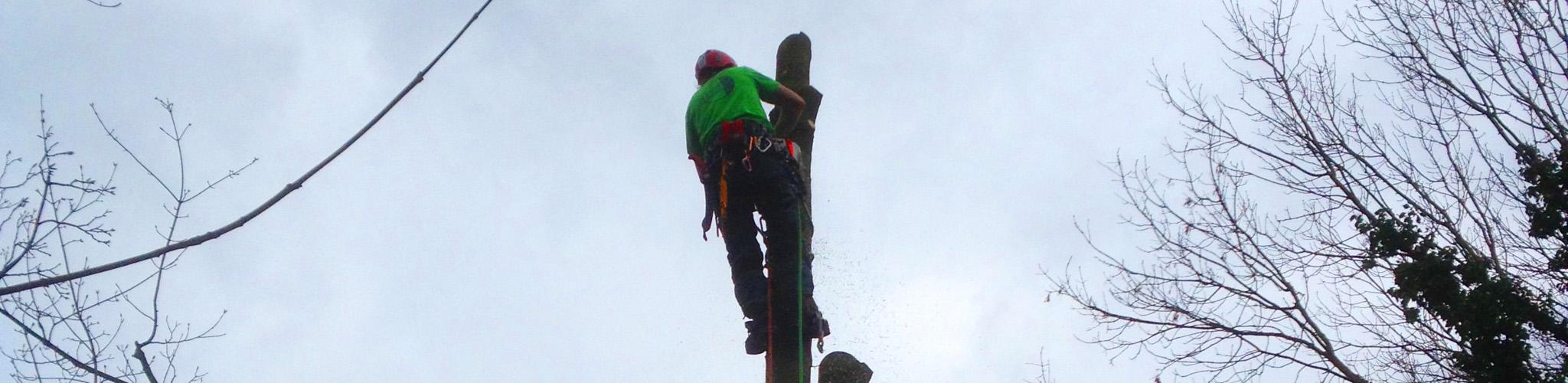 Slider Baumarbeit, Bild 4, Fällarbeiten